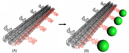 A 3-D model of a DNA nanostructure. Biodesign Institute at Arizona State University