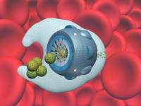 Gobblebot: Artificial White Blood Cell - Tim Fonseca