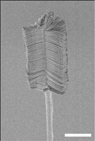 Nanotube Brush