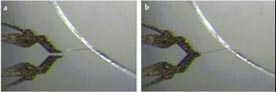 Zyvex -  microgrippers grasping collagen fiber, and pulling the fiber taut