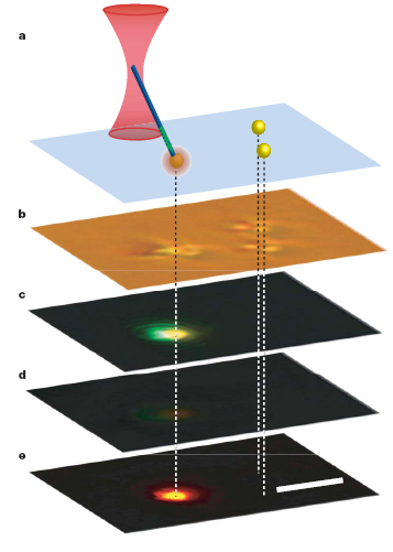 In a demonstration of the nanowire light source's fluorescence mode, a nanowire in the grip of an infrared beam was touched to a fluorescent bead causing the bead to fluorescence orange at the contact point. Figure a shows the experimental set up with the pair of beads on the right as control; b is a bright-field optical image of the beads, with the nanowire in contact with the leftmost bead; c is a color CCD fluorescence image showing green light emission from the nanowire and the orange emission from the bead; d is a control image of the same beads with infrared radiation but no trapped nanowire; and e is digital subtraction of d from c.