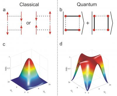 For simplicity, the team focused on a square of spins, the tiny bar magnets associated with the electrons in the copper atoms in the organometallic material studied by the researchers. The left (c) shows a calculated neutron image for these spins when they behave as classical objects (a), while the right (d) shows the image when they are entangled (b). The images are dramatically different in the two cases, taking the form of a nearly circular spot for the classical case and a cross for the quantum, entangled state.