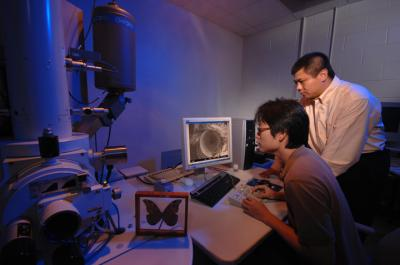 Moth Eyes