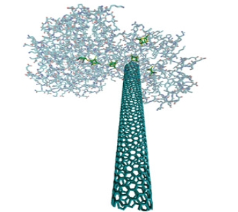 "Computer graphic representation of a single-walled carbon nanotube (elongated structure) ""wired up"" to a hydrogenase enzyme. Courtesy of Michael J. Heben, National Renewable Energy Laboratory"