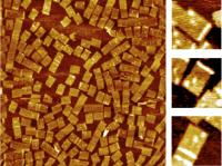 On the left is an AFM image of DNA nanoarrays bound to their RNA targets at 1500nm x 1500nm scale. The zoom-in images (150nm x 150nm scale) on the right clearly show the barcode (white dots) that identifies the nanoarray and the RNA hybridization signal on the DNA nanoarray ( white bar).