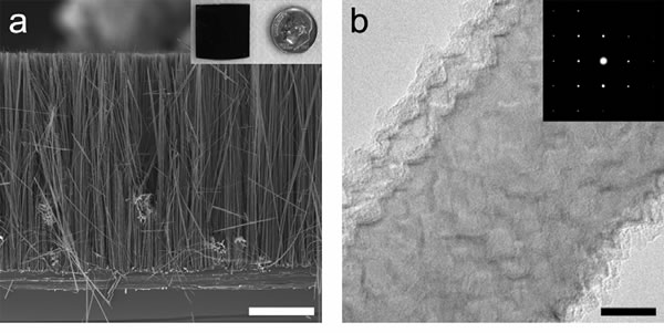 Figure (a) is a cross-sectional scanning electron microscope image of an array of rough silicon nanowires with an inset showing a typical wafer chip of these wires. Figure (b) is a transmission electron microscope image of a segment of one of these wires in which the surface roughness can be clearly seen. The inset shows that the wire is single crystalline all along its length.