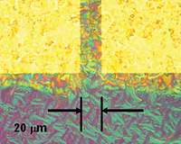 Optical micrographs of typical FET structures in the NIST/Penn State/UK experiments show the effect of pretreating contacts to promote organic crystal formation. Treated structure (l) shows crystal structure extending from the rectangular contacts and merging in the channel in contrast to untreated contacts (r).