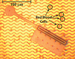 A photograph of a typical nanosoccer robot compared in size to red blood cells. About 200 of these robots could stretch in a line across the top of a plain M&M candy.