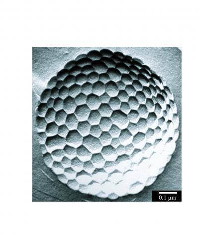 Micrometer-size bubble covered with approximately 50 nm hexagons