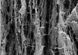 Scientists report development of cellulose nanopaper, a superstrong material that could be used in the construction industry. Above is a cross-section of a fracture surface of a cellulose nanofibril film. 
