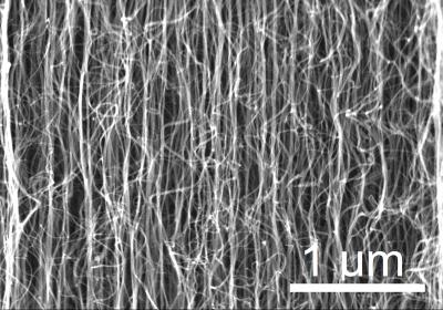 Scanning electron microscope images of the vertically-aligned multi-walled carbon nanotubes grown for this research.