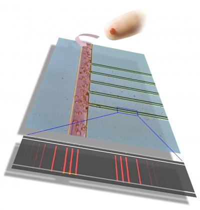 An optical micrograph of the chip itself, showing the region on the chip from which the plasma is separated from the whole blood. Whole blood cells can be seen traveling down the wider channel. The thinner channels are the plasma skimming channels. Channel dimensions: large channel ~50 micrometer wide; skimming channels ~10 micrometers wide. The barcode at the bottom of the drawing represents a panel of about 10 proteins that were measured from a fingerprick of blood within the 10 minute time from from fingerprick to completion of the critical assay steps. This particular chip, which was about the size of a microscope slide, contained regions for 8 separate fingerprick assays.