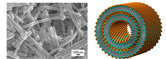 Figure 1 (Left) FE-SEM image of the metal-complex-type organic nanotubes and (Right) their proposed structure. Metal ion is designed as an orange ball, a hydrophilic part of the amphiphile as a light blue ball, and a hydrophobic part of the amphiphile as a gray stick.