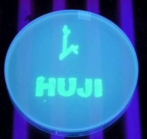 Decorative bugs - genetically engineered bacteria that fluoresce when exposed to toxic chemicals, spell out HUJI (Hebrew University of Jerusalem) on a Petri dish. (Photo: Business Wire)