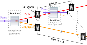 In this simplified representation of the experimental setup for a �quantum buffer,� a cell containing rubidium gas is used to produce a pair of information-rich entangled images. One of the images goes through a second rubidium gas cell and slows down, which is potentially useful for feeding data at properly timed intervals to future quantum computers. The delay can be controlled such that, during the time it takes one image to travel a centimeter, the other image can travel up to 8 meters. The twisted loops illustrate the entanglement between the images.