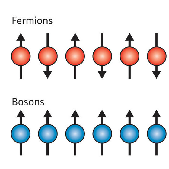 Figure 1: The spins on a chain of fermions (top) point in alternating directions, whereas the spins on a chain of bosons (bottom) all point in the same direction. In the latter case, this leads to the emergence of acoustic and spin wave excitations with markedly different spectra. According to the new theory, such differences should be evident in the way a 1-D system of ultracold bosonic atoms absorbs different frequencies of light.