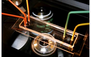 This microfluidic device was used to discover new information about marine bacteria.