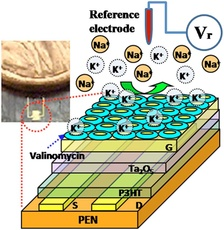 Scaled-up schematic of the ion-sensitive field effect transistor that measures concentrations of potassium and hydrogen ions in the human heart.