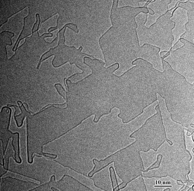 This is an electron micrograph showing the formation of interconnected carbon nanostructures on a graphene substrate, which may be harnessed to make future electronic devices.
