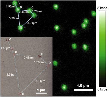 Berkeley Lab researchers have developed ideal single-molecule light emitting probes that represent a significant step in scrutinizing the behaviors of proteins and other components in complex systems such as a living cell.