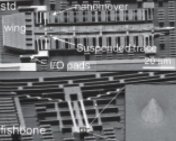 XSEM overview of IMEC�s standard and fishbone cantilever designs with suspended Pt trace and sharp tips.