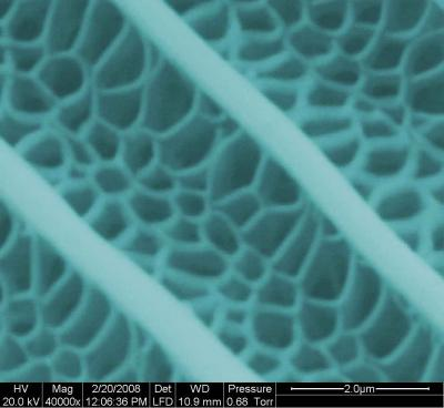 This is a section of a butterfly wing under a microscope.