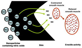 Nanoparticles developed by Einstein researchers can ferry