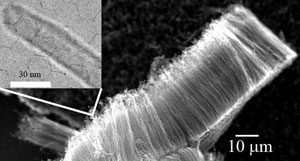 Carbon nanotubes could serve as supercapacitor electrodes with enhanced charge and energy storage capacity (inset: a magnified view of a single carbon nanotube).