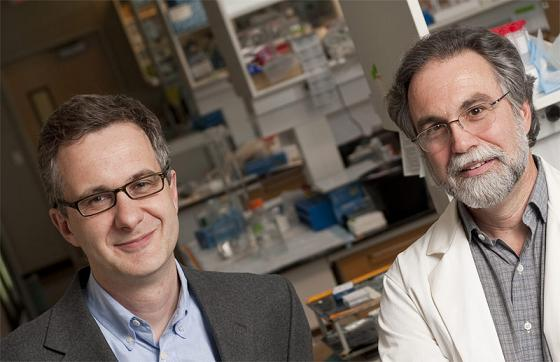 The Johns Hopkins Engineering in Oncology Center at INBT will be headed by Denis Wirtz, left. Gregg Semenza will serve as associate director. (Photo by Will Kirk/JHU)