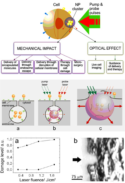 • Cell theranostics: dynamically tuned intracellular plasmonic nanobubbles combine diagnosis (through optical scattering), therapy (through mechanical, nonthermal and selective damage of target cells) and optical guidance of the therapy into one fast process.