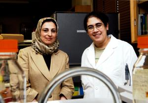 On Target: Lavasanifar (left) and fellow researcher Samar Hamdy are developing complex nanoparticles that range from 100 to 500 nanometres in size.  Photo by Pete Yee