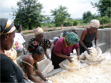 Women in Ghana work with cassava, which is cut, milled, pressed and dried (sometimes fermented first).  Photo courtesy of Paula Hammond
