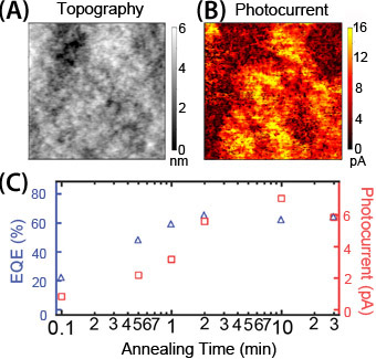 Microscopic heterogeneity in (A) topography and (B) photocurrent on P3HT/PCBM blends. (C) Correlation between spatially-averaged photocurrent measured via photoconductive AFM (pcAFM) and EQE measurements for P3HT/PCBM blends annealed for different lengths of time indicate that pcAFM data are qualitatively consistent with expected device performance.