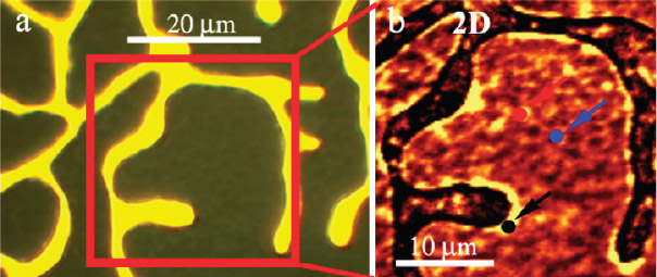 (a) Optical image of a CVD graphene film on a copper layer showing the finger morphology of the metal; (b) Raman 2D band map of the graphene film between the copper fingers over the area marked by the red square on left. (image from Yuegang Zhang)
