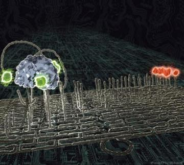 "The latest installment in DNA nanotechnology has arrived: A molecular nanorobot dubbed a ""spider"" and labeled with green dyes traverses a substrate track built upon a DNA origami scaffold. It journeys towards its red-labeled goal by cleaving the visited substrates, thus exhibiting the characteristics of an autonomously moving, behavior-based robot at the molecular scale. Credit: Courtesy of Paul Michelotti"
