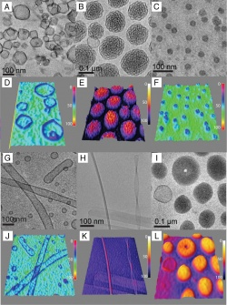 Cryo-TEM and 3-D intensity profiles of (A and D) polygonal dendrimersomes. (B and E) Bicontinuous cubic particles co-exist with low concentration of spherical dendrimersomes. (C and F) Micelles. (G and J) Tubular dendrimersomes. (H and K) Rodlike, ribbon and helical micelles. (I and L) Disk-like micelles and toroids. Credit: University of Pennsylvania