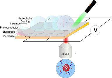 "This diagram depicts the design of a new ""hybrid optoelectric"" device. The device uses a tightly focused infrared laser beam to position tiny particles, such as viruses and bacteria, onto a sensor. (Han-Sheng Chuang/Purdue University Birck Nanotechnology Center)"