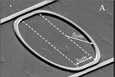 A scanning electron microscope (SEM) image of a SOI microring resonator of 5�m radius