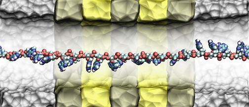 A cross section of IBM's DNA Transistor simulated on Blue Gene supercomputer showing a single stranded DNA moving in the midst of (invisible) water molecules through the nanopore. The DNA molecule, at the center of the pore, contain the bases A, C, G and T, that code of biological information necessary for life.