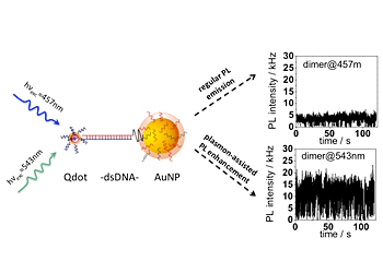 Photoluminescence enhancement is demonstrated at the single molecule level for two-particle systems composed of a quantum dot (Qdot) and gold nanoparticle (AuNP) linked by double stranded DNA (dsDNA) when optically excited with wavelengths within the surface plasmon resonance range of the gold nanoparticle.