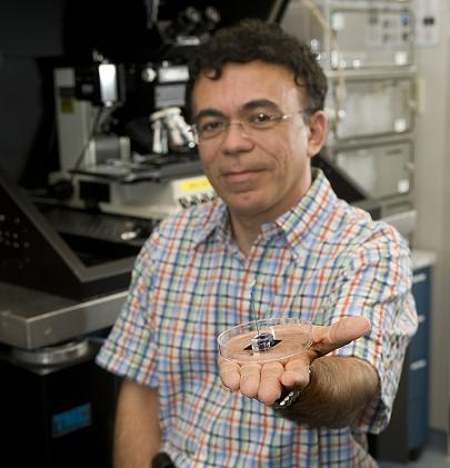 "Babak Ziaie, a Purdue professor of electrical and computer engineering and biomedical engineering, shows a new type of pump for drug-delivery patches that might use arrays of ""microneedles"" to deliver a wider range of medications than now possible with conventional patches. (Purdue University photo/Mark Simons)"