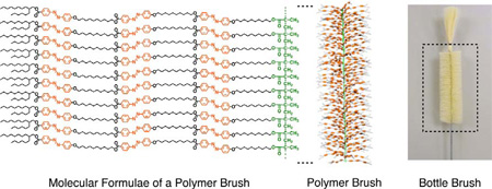 Left: Molecular formulae of a polymer brush. Center: Schematic illustration of the polymer brush. Right: Photograph of a bottle-cleaning brush for comparison.