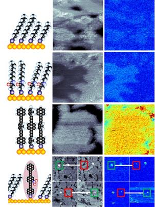 Simultaneously acquired images and polarizability maps of four different families of molecules