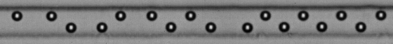 A self-assembled lattice of 10-micrometer diameter particles flowing through a microfluidic channel.