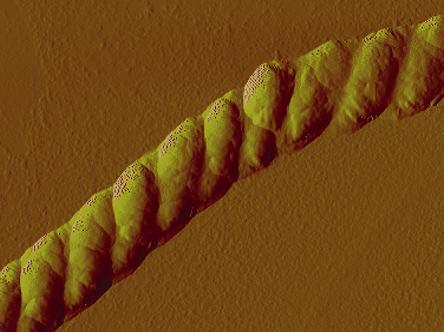 Berkeley Lab scientists have developed a nanoscale rope that braids itself, as seen in this atomic force microscopy image of the structure at a resolution of one-millionth of a meter.