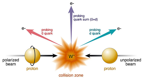 Illustration of a new measurement using W boson production in polarized proton collisions at RHIC. Collisions of polarized protons (beam entering from left) and unpolarized protons (right) result in the production of W bosons (in this case, W-). RHIC's detectors identify the particles emitted as the W bosons decay (in this case, electrons, e-) and the angles at which they emerge. The colored arrows represent different possible directions, which probe how different quark flavors (e.g., �anti-up,� �; and �down,� d) contribute to the proton spin.