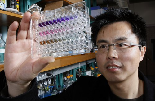 W. Andy Tao uses nanopolymers and chemical reactions that cause color changes in a solution to detect activity related to cancer cell formation. (Purdue Agricultural Communication photo/Tom Campbell)