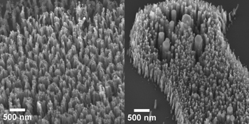 Images of carbon nanofibers grown from nickel nanoparticle catalysts: (left) without removing the ligands and (right) after removing the ligands from the nanoparticles before nanofiber growth. Note how the nanofibers grown from nanoparticles with ligands are more uniform in diameter and distribution.