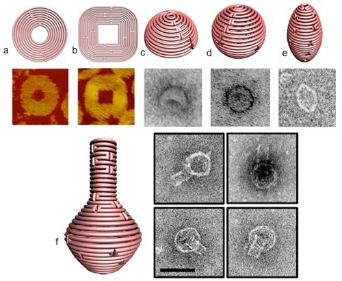 Figure 1 a and b display schematics for 2D nanoforms with accompanying AFM images of the resulting structures. 1-c-e represent 3D structures of hemisphere, sphere and ellipsoid, respectively, while figure 1f shows a nanoflask, (each of the structures visualized with TEM imaging).