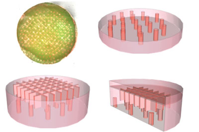 Ying Zheng
